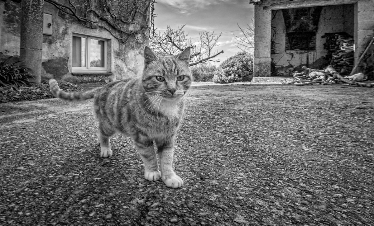 Photograph Gibbles by Michael Avory on 500px