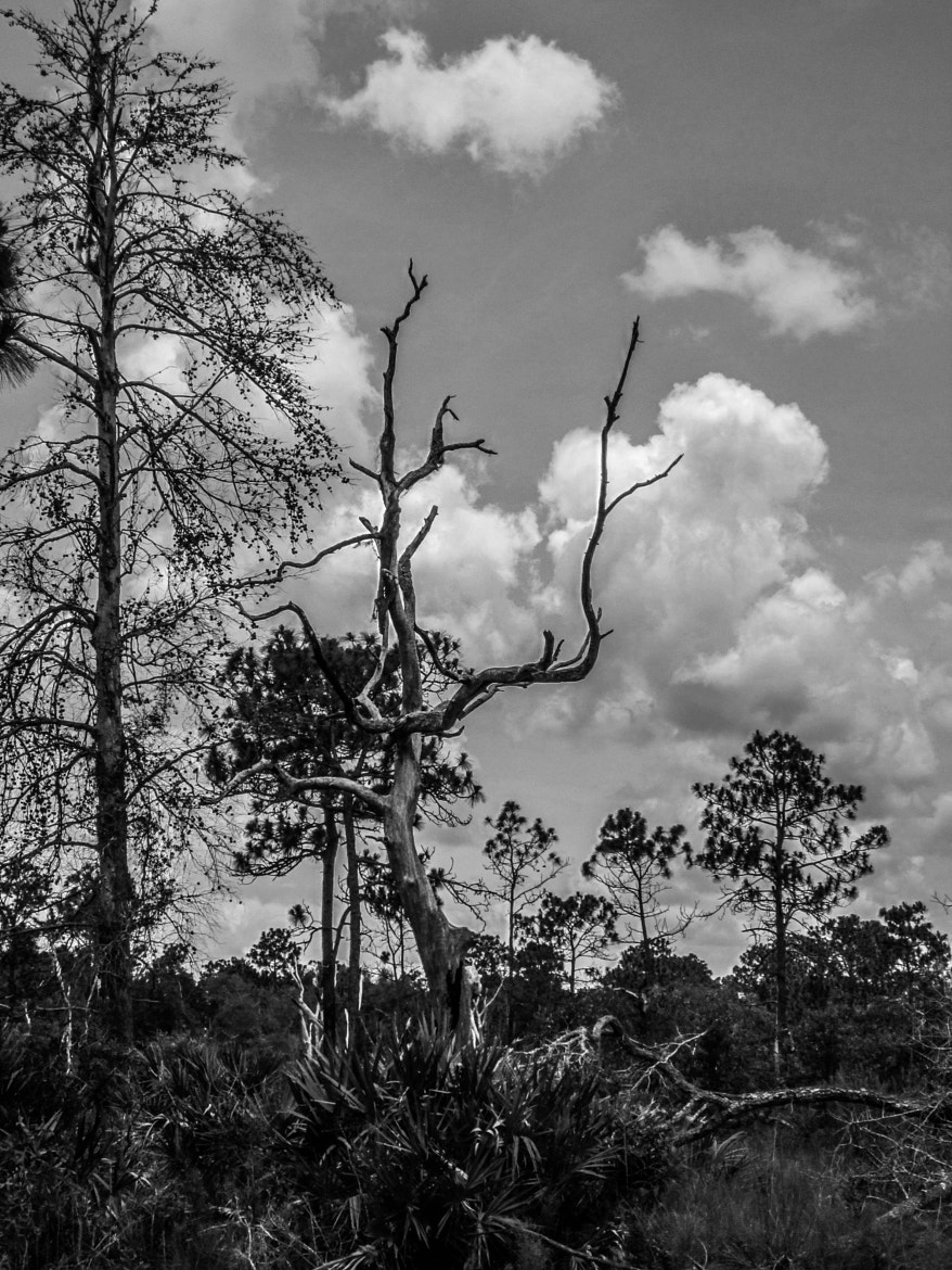 Photograph Florida Woods by Alyssa Paraggio on 500px