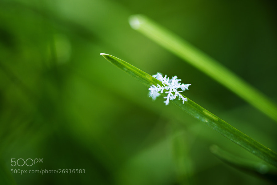 Winter's Butterfly by Amar Rai on 500px.com