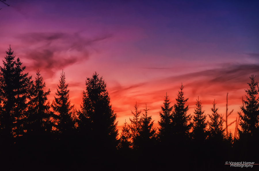 Photograph The sky is on fire! by Vegard Hamar on 500px