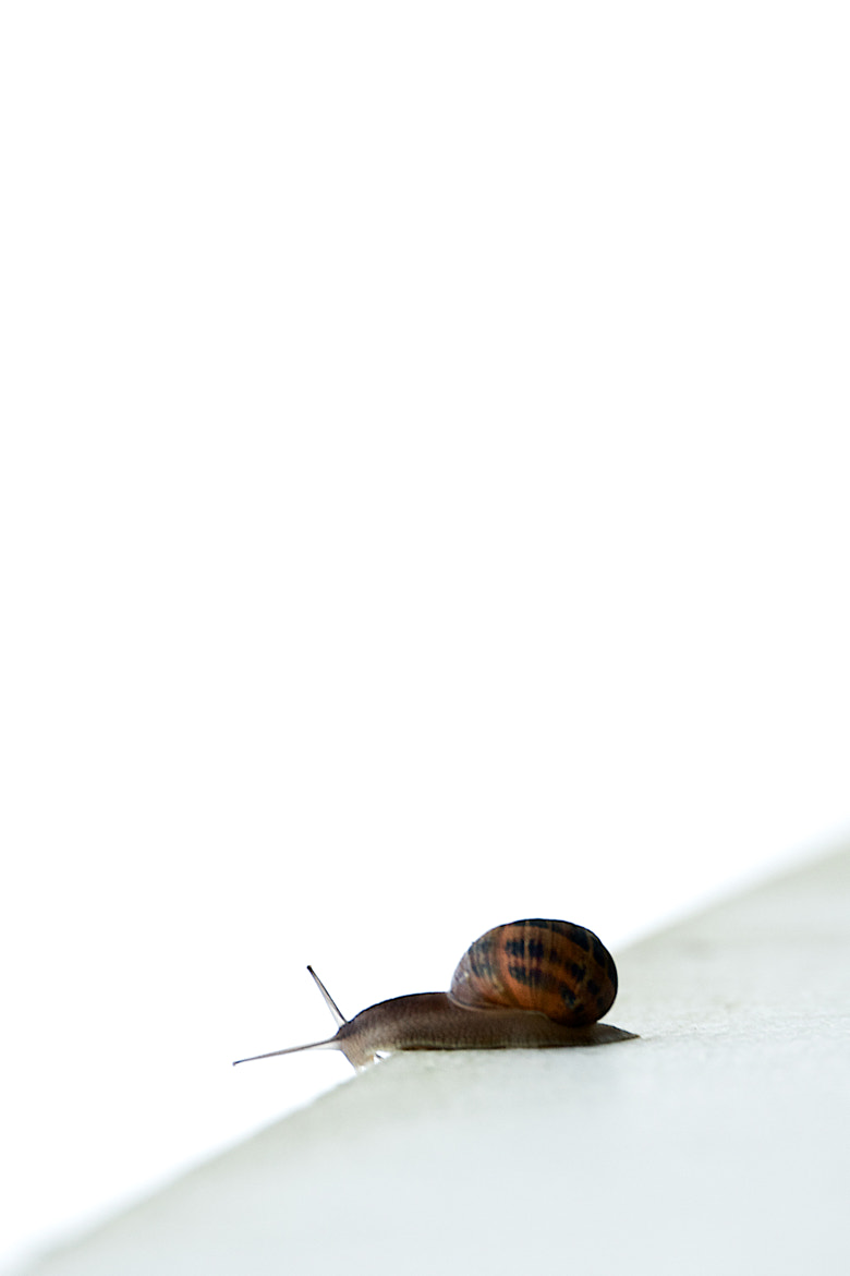 Photograph Escargot by Rui Caria on 500px