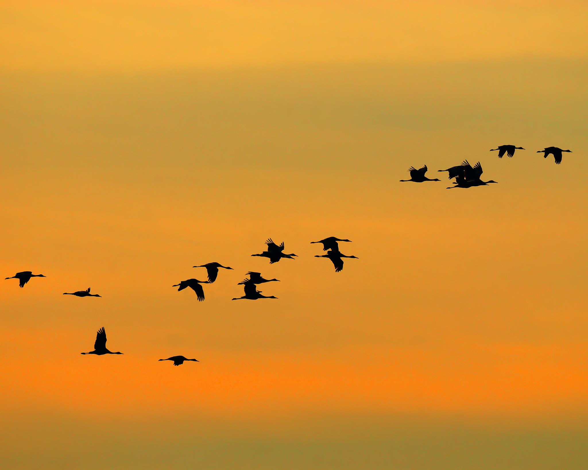 Photograph Dawn Migration by Tony Beck on 500px