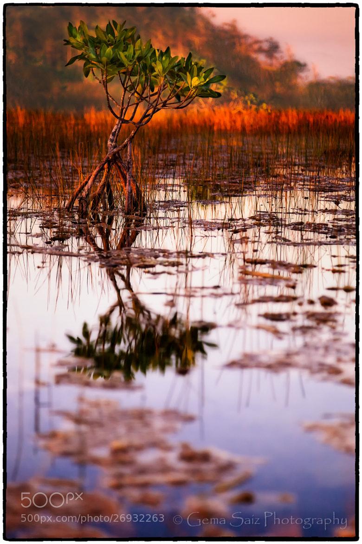 Photograph Graceful Bow by Gema  Saiz Fine Art Photography on 500px