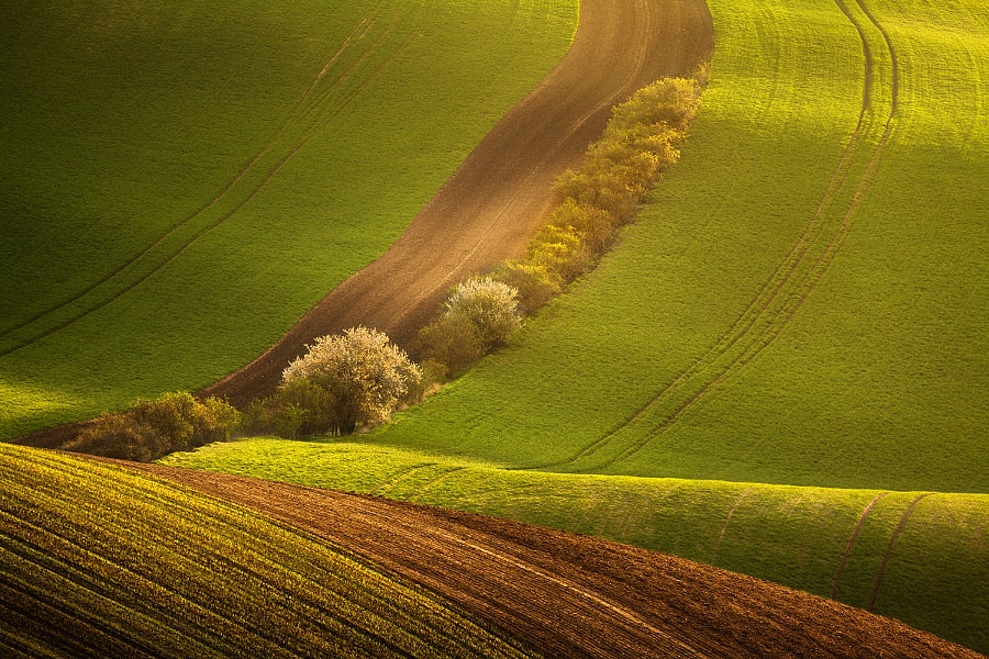 Morning in the fields by Daniel Řeřicha on 500px.com