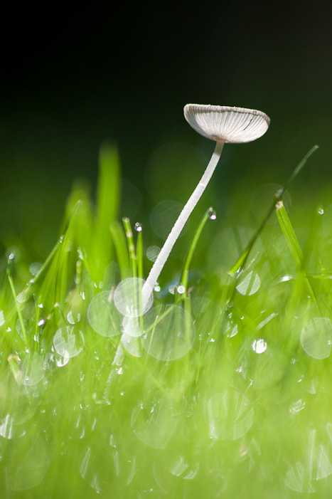 Photograph Lonely mushroom by Marco de Groot on 500px