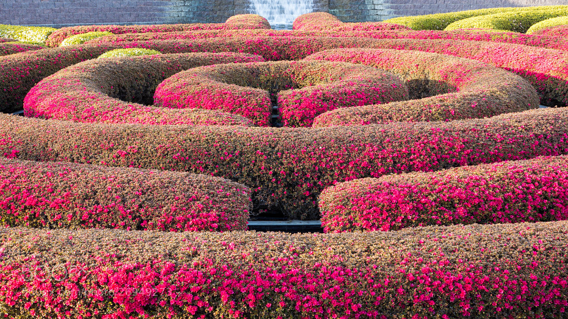 Photograph The Getty Hedge by Erik Anderson on 500px