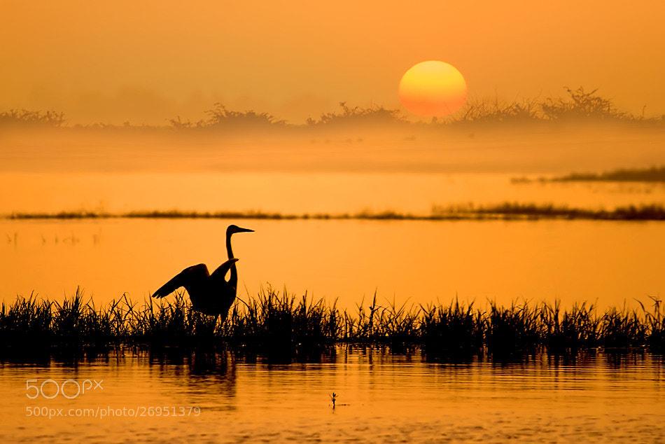 Photograph Early Bird by Nitin  Prabhudesai on 500px