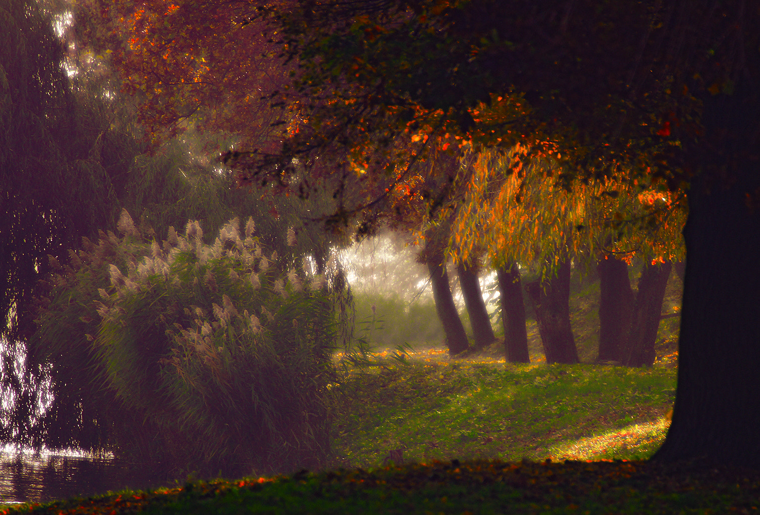Photograph foliage on during by Andy 58 on 500px
