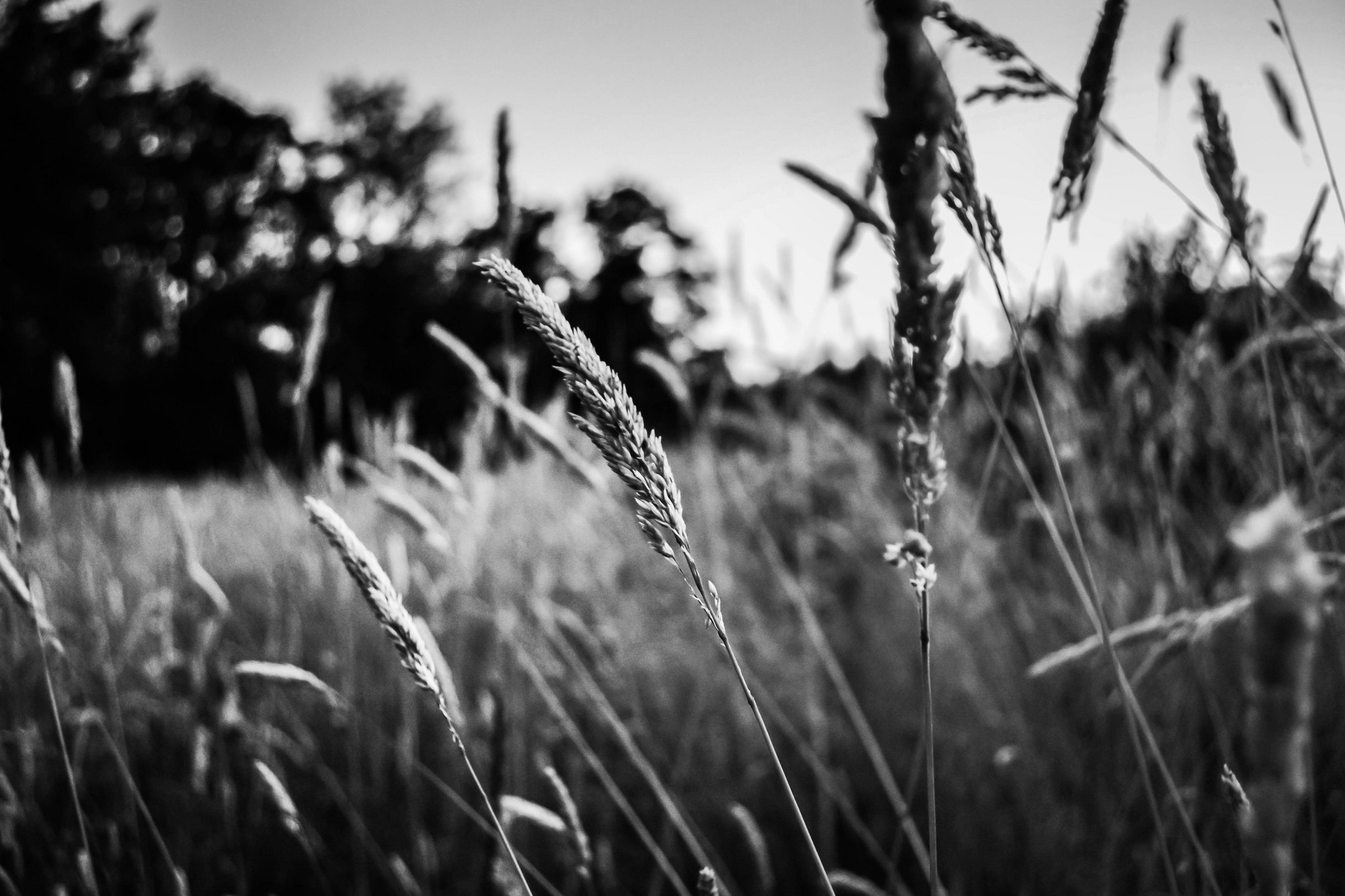 Photograph Tangled In This Trampled Wheat by Garrett Ewing on 500px