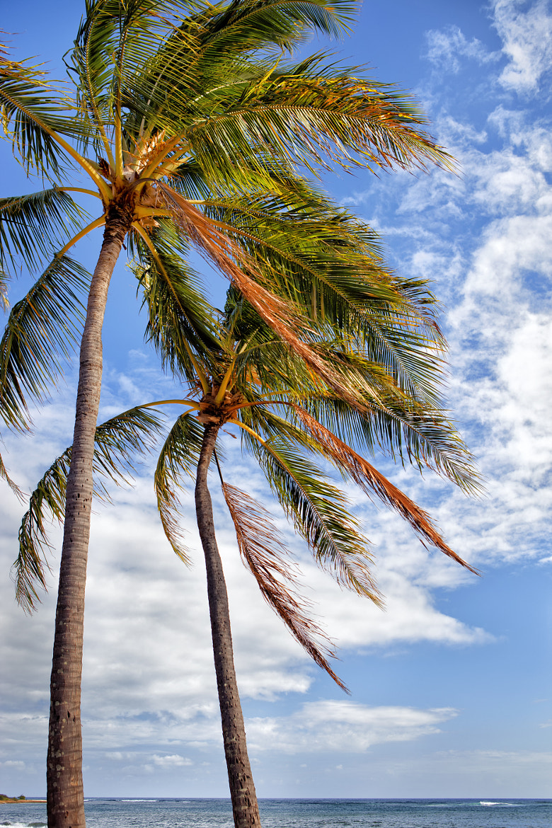 Photograph Two palm trees by Ian Frazier on 500px