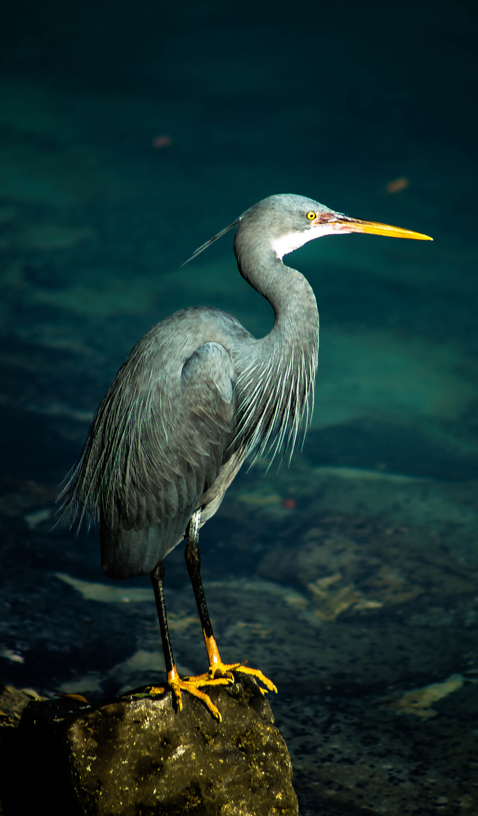 Photograph The Heron by julian john on 500px