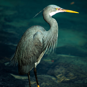 The Heron by julian john (sandtasticdays)) on 500px.com