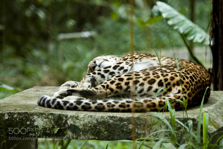 Photograph afternoon siesta by Raymond Villa on 500px