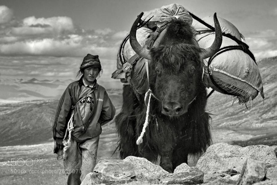The yak man by Javier  Camacho Gimeno (JavierCamacho) on 500px.com