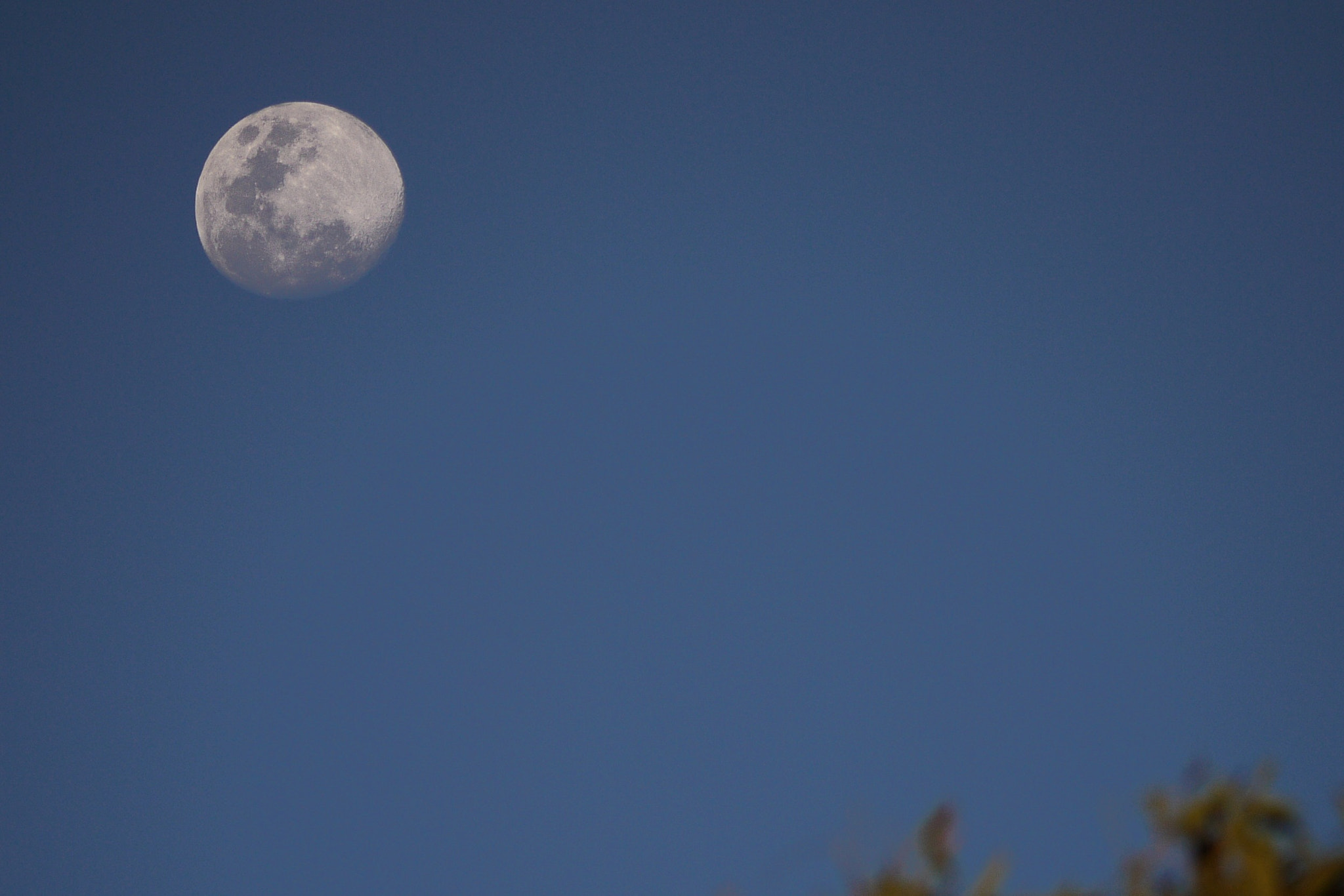 Photograph Evening Moon by tsuken on 500px