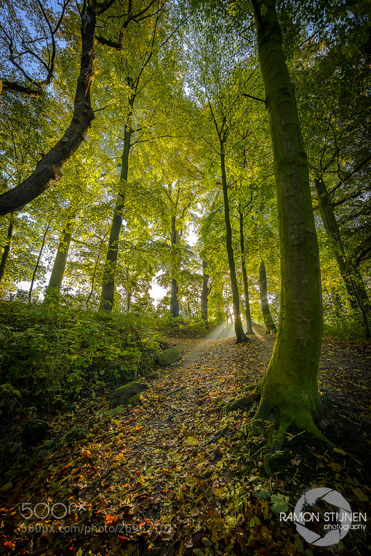 Photograph Sunny Path by Ramon Stijnen on 500px