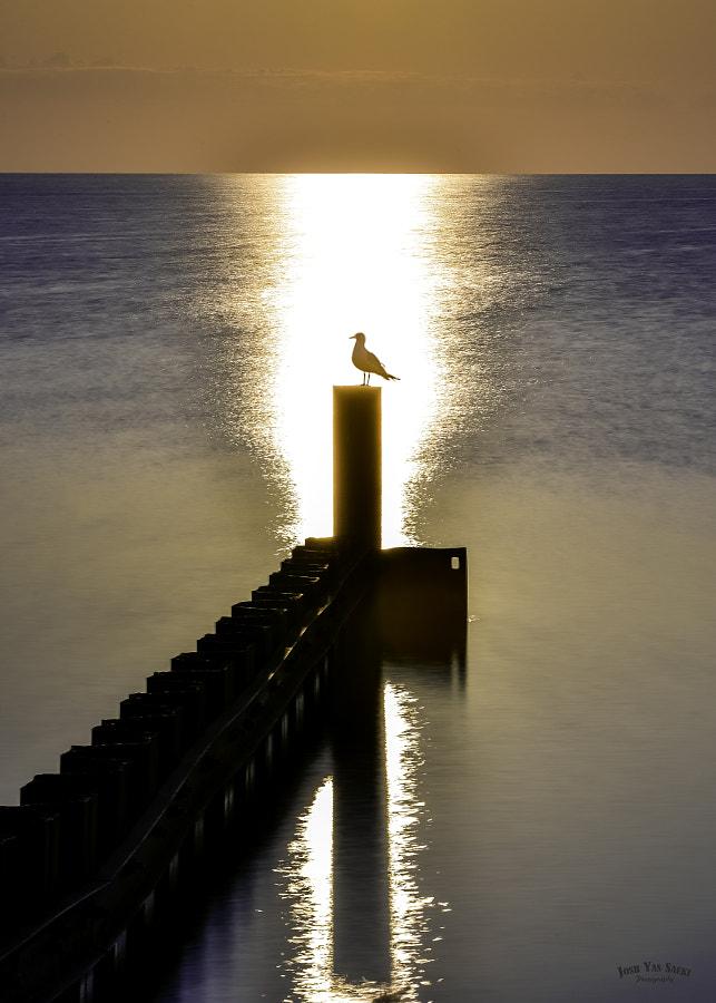 Bright morning sunshine and gull, автор — Josh Saeki на 500px.com