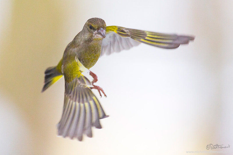 Photograph Fly by Michel d'Oultremont on 500px