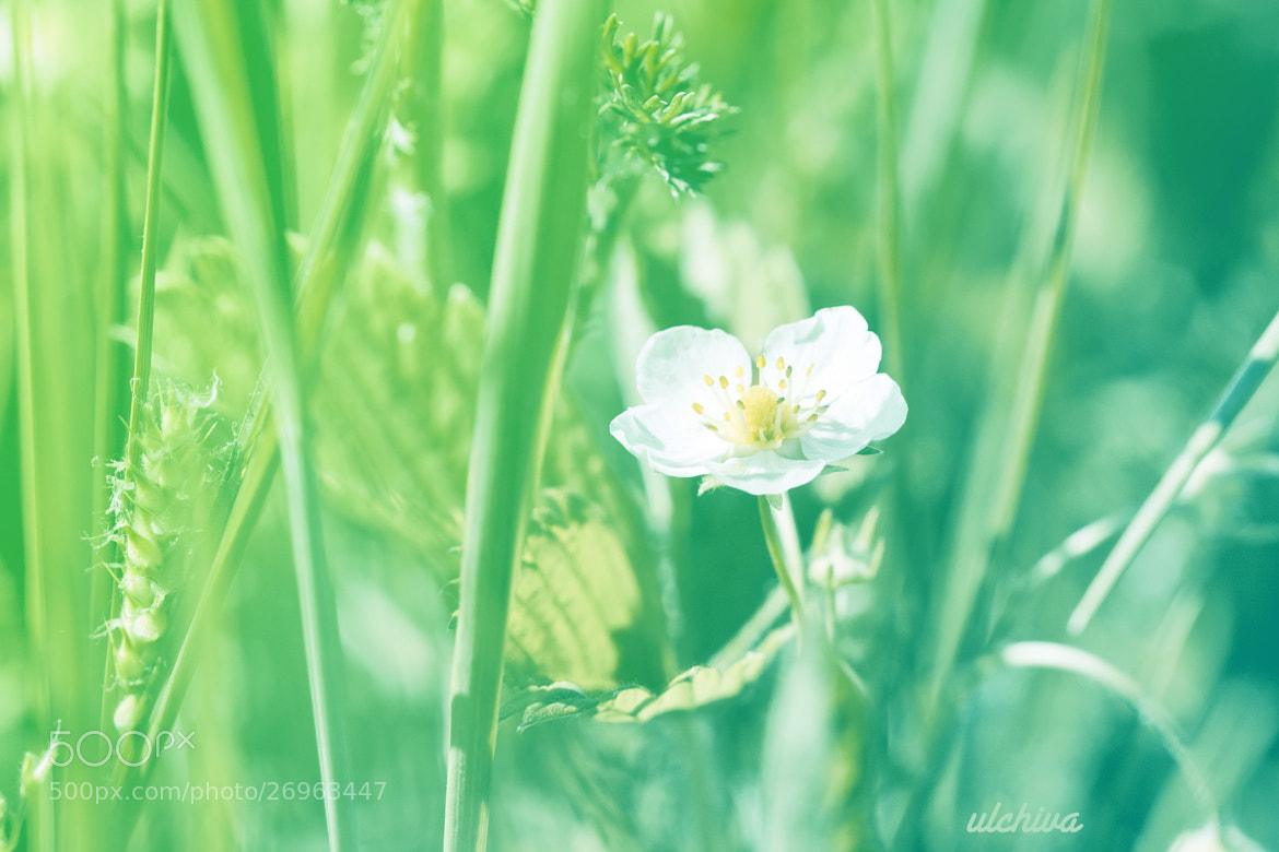 Photograph summertime by Julia Iva on 500px