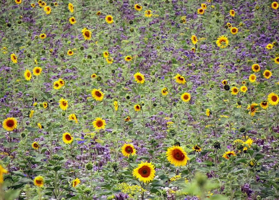 ...Lovely nature ..., автор — Pedro Liborio на 500px.com
