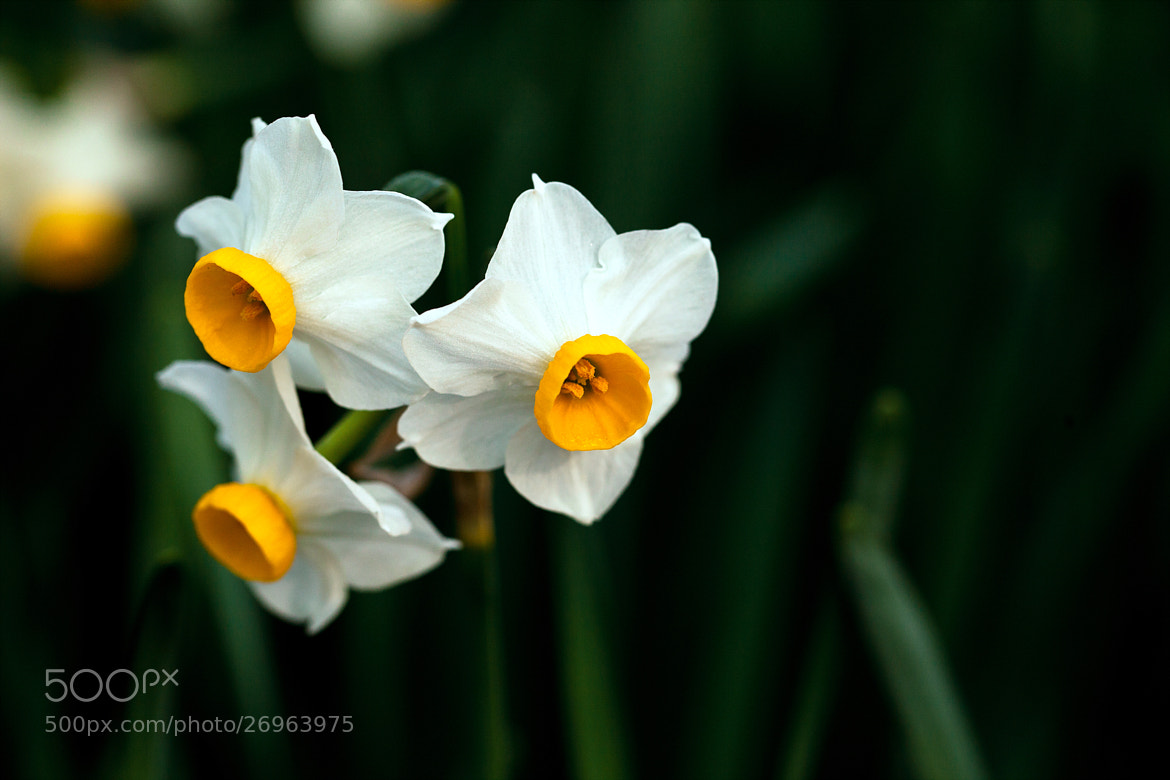 Photograph Wildflowers #2 by Seong-Wook Kim on 500px