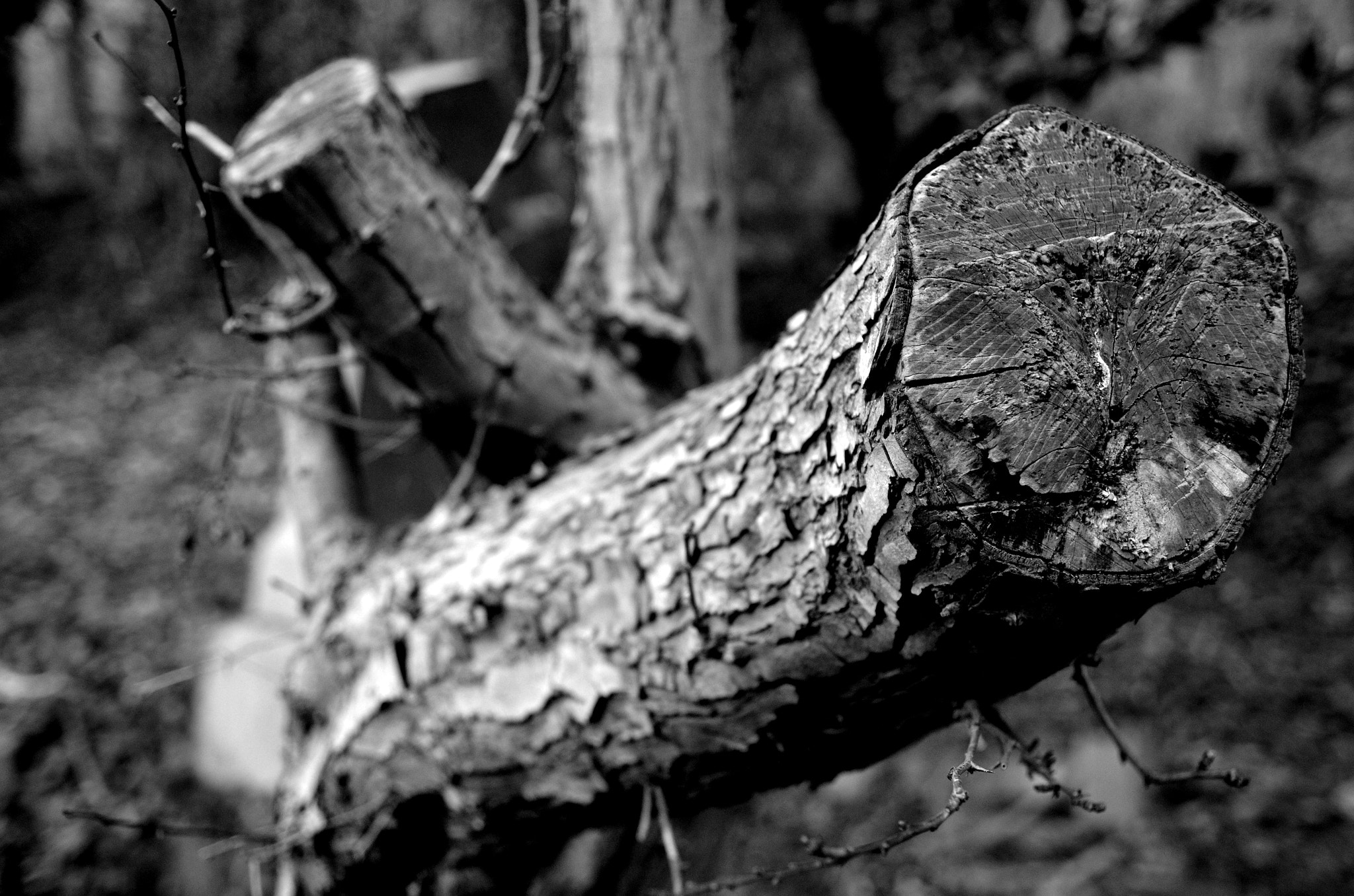 Photograph Felled Tree Branch by MalekPhotography on 500px