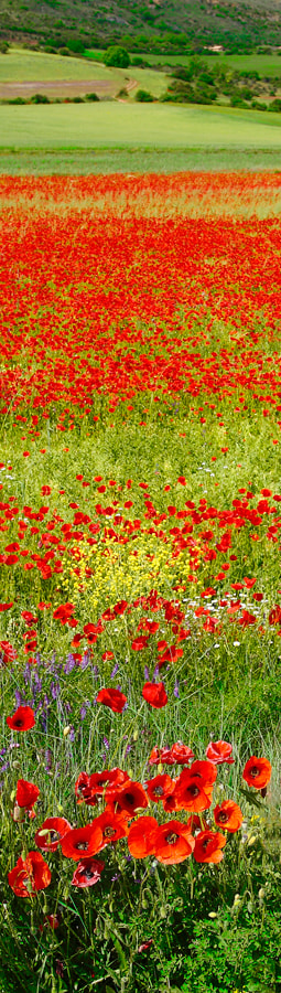 Photograph Red spring by Andrés López on 500px