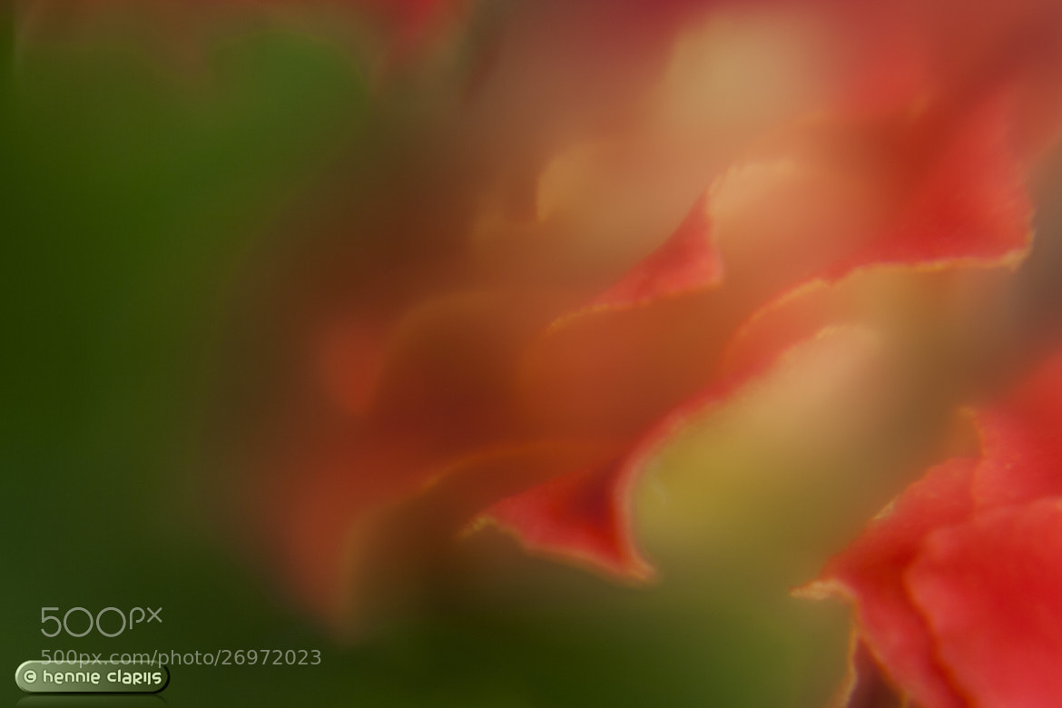 Photograph Another flower of the Kalanchoë by Hennie Clarijs on 500px