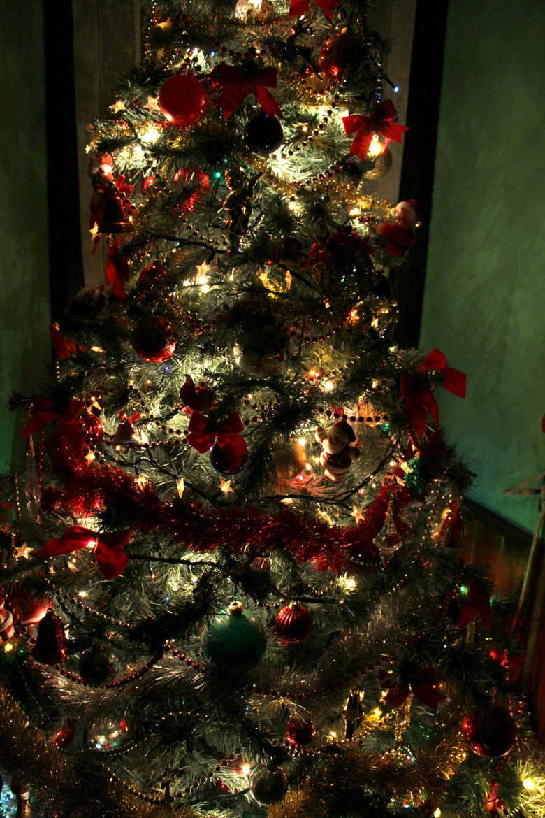Photograph Christmas tree ∞ by biansci ∞ on 500px