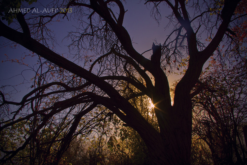 Photograph Between the branches of the tree by AHMED AL-AUFI on 500px