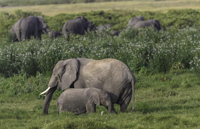 World Elephant Day!! Happy Elephant Family