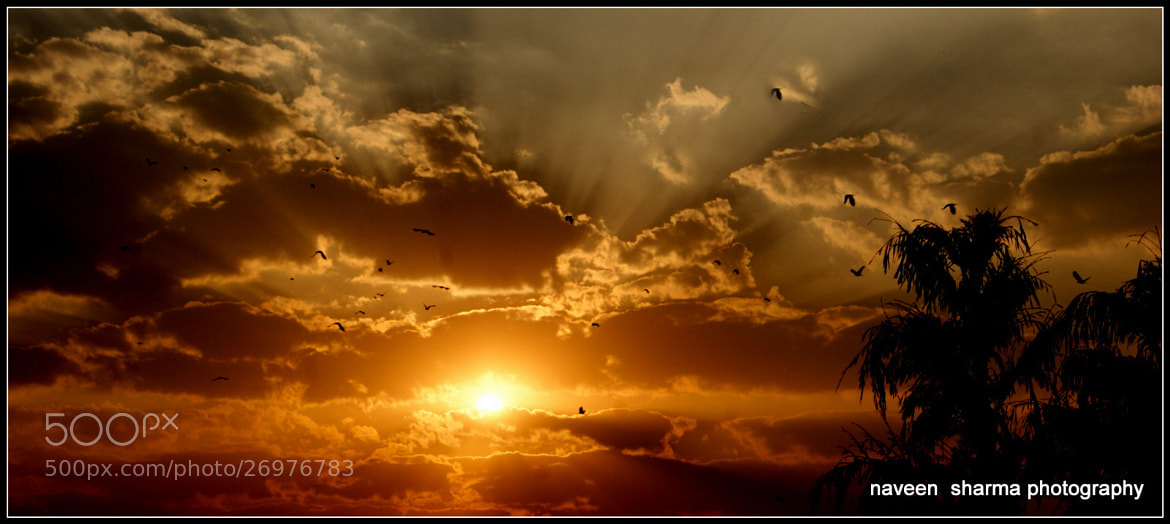 Photograph Birds back to home by naveen sharma on 500px