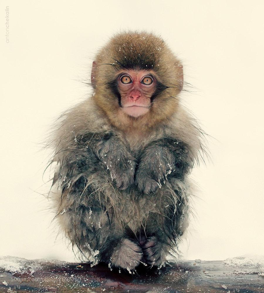 Photograph Snowbound by Anton Chekalin on 500px