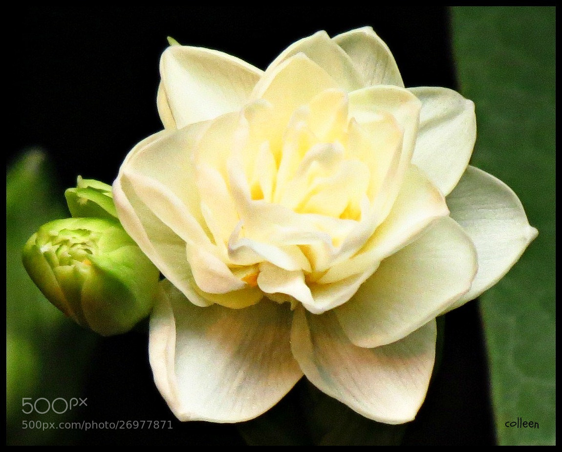 Photograph Spring! by colleen thurgood on 500px