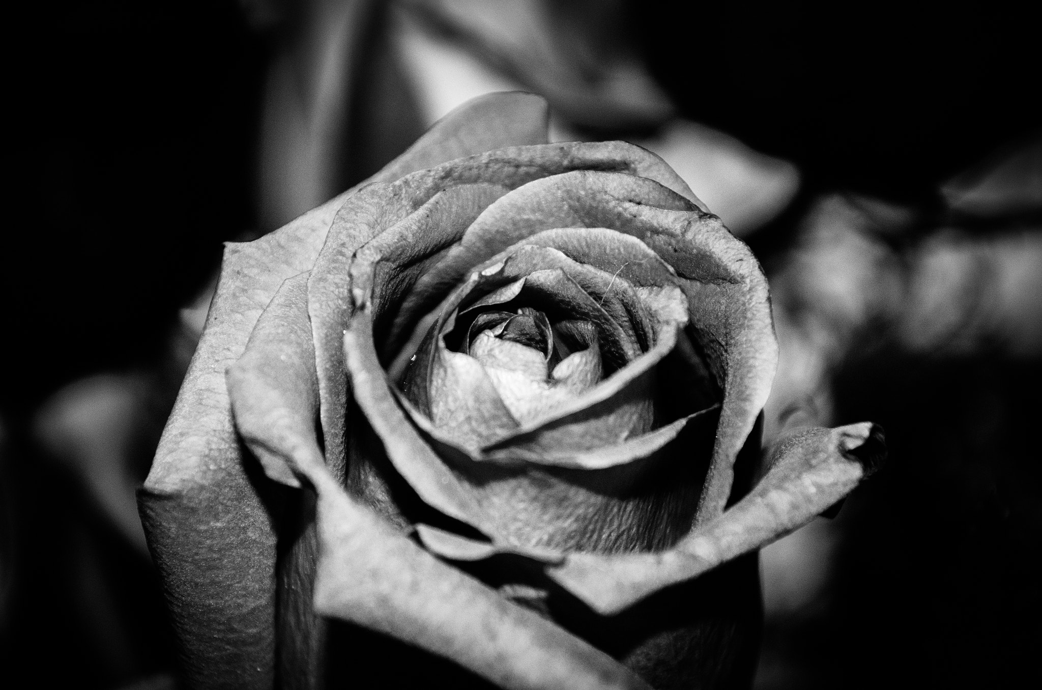 Photograph Black and White Flower by Danny Kooiker on 500px