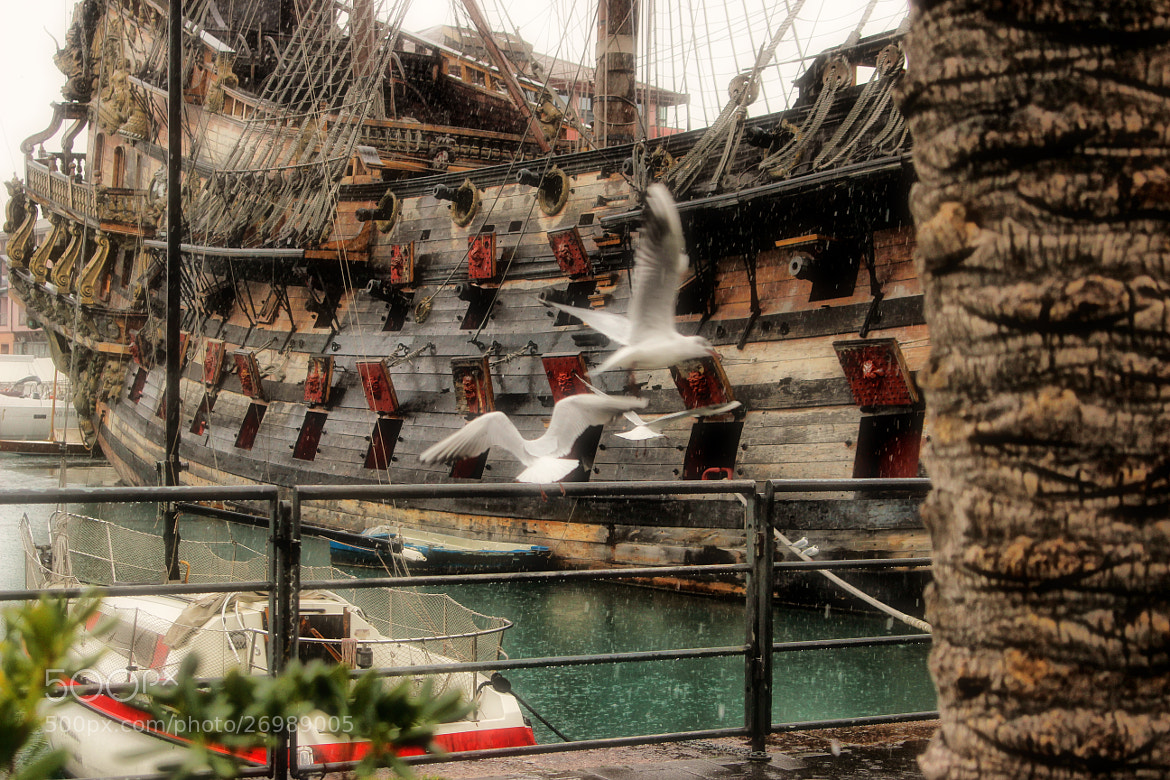 Photograph Seagulls of Genoa by Ignats Knuslis on 500px