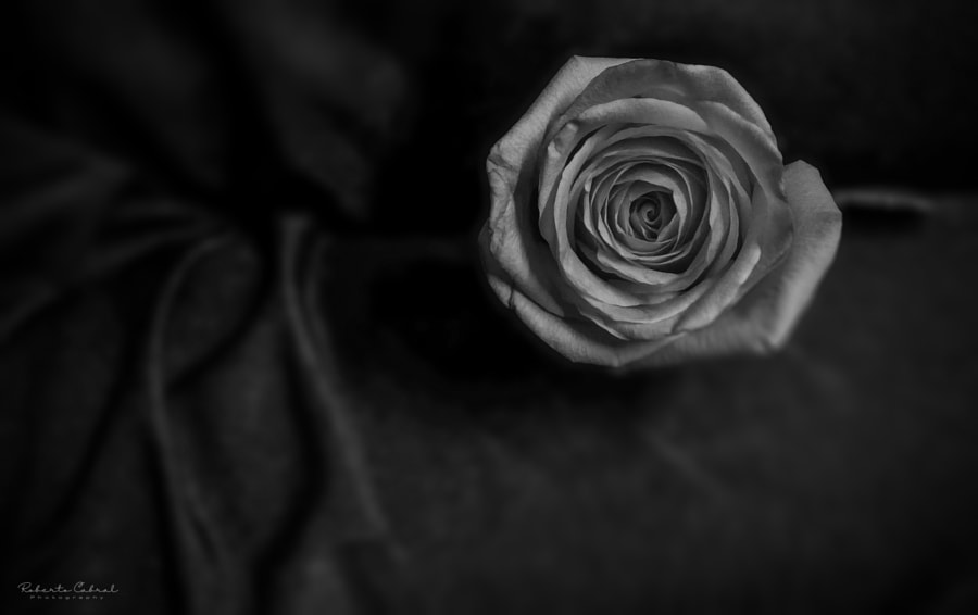 Rannicchiata nell'ombra de Roberto Cabral │Image & Photography en 500px.com
