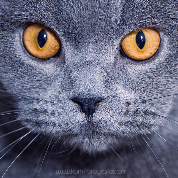 Photograph hypnotize by Kath´s Fotografie on 500px