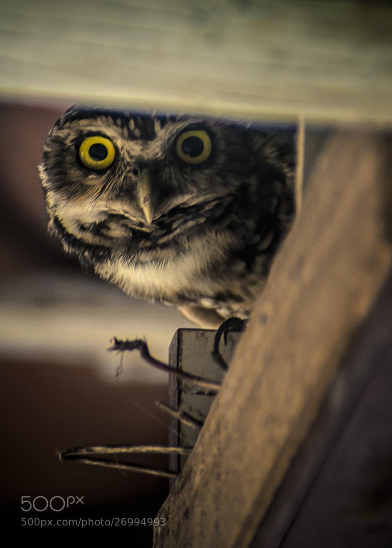 Photograph Angry Owl by Matheus Dalmazzo on 500px