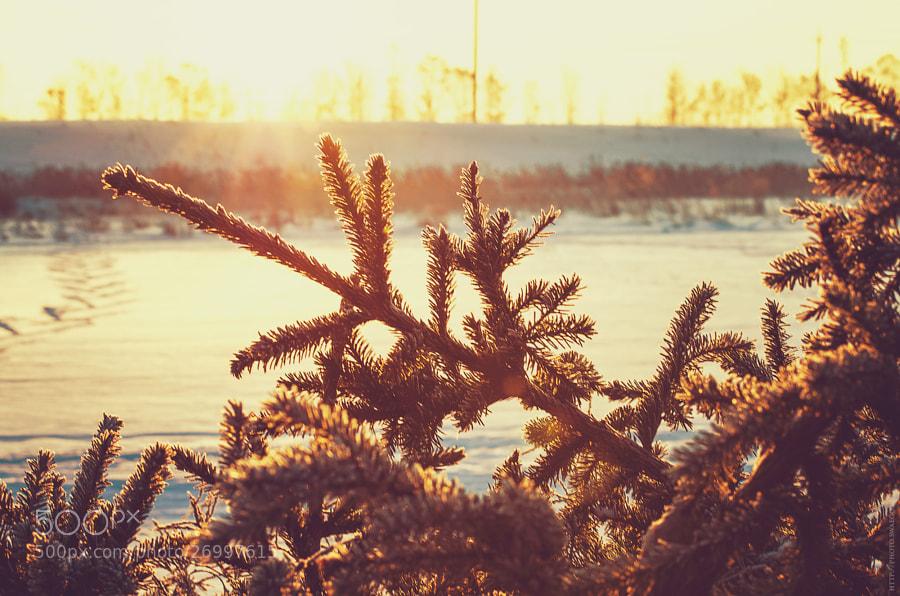 Winter morning by Tolik Maltsev on 500px.com