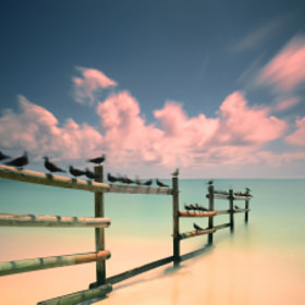 Back from Ile aux cocos by Fred Melot (Fred_Melot)) on 500px.com