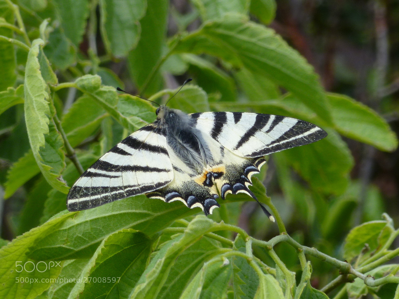 Photograph Swallowtail by Ellen van den Brom on 500px