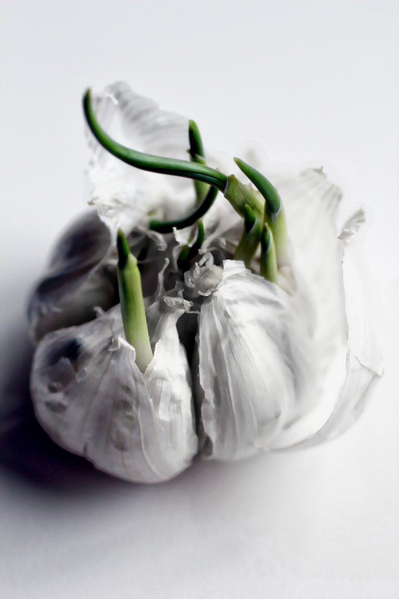 Photograph Garlic by Anne Costello on 500px