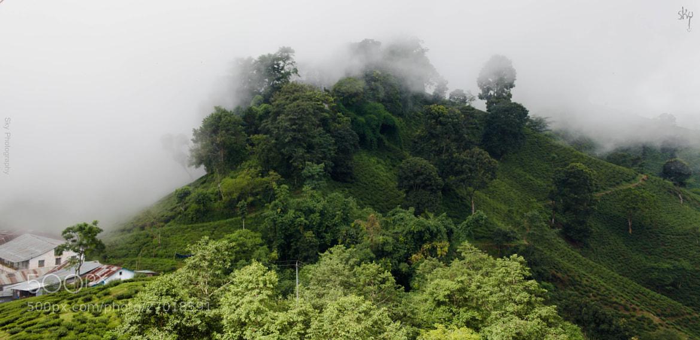Photograph Illam - NEPAL by Keshav Yadav on 500px