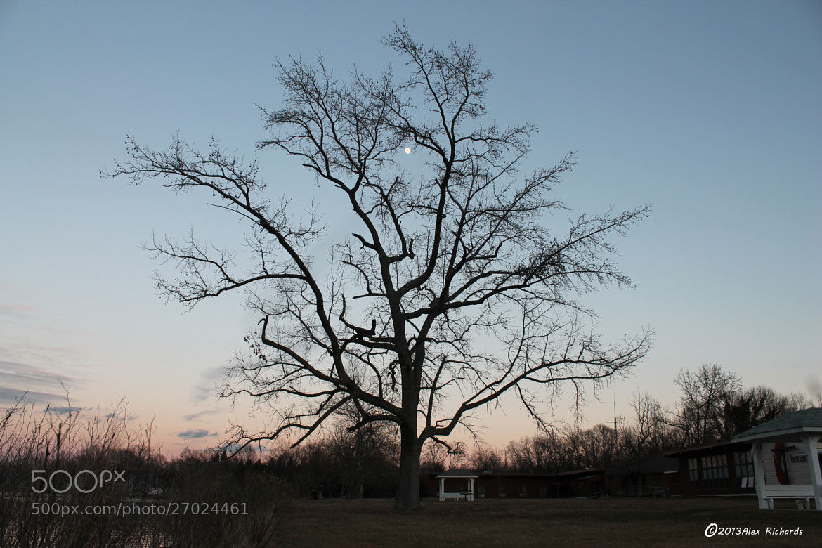 Photograph Tree at Sunset by Alex Richards on 500px