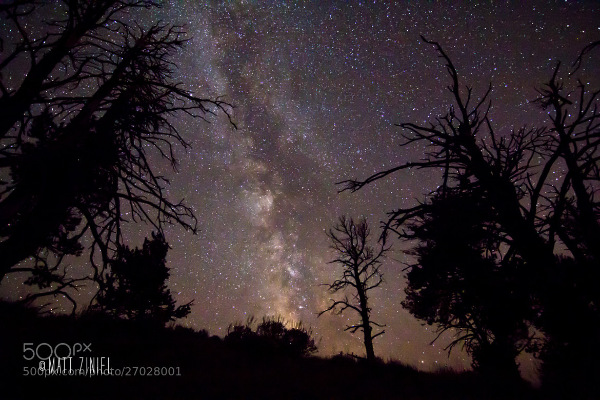 Photograph Milky Way Through the Trees by Matt Ziniel on 500px