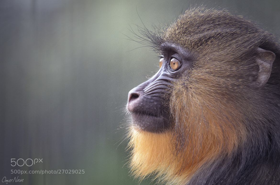 Photograph Gaze by Omer Nave on 500px