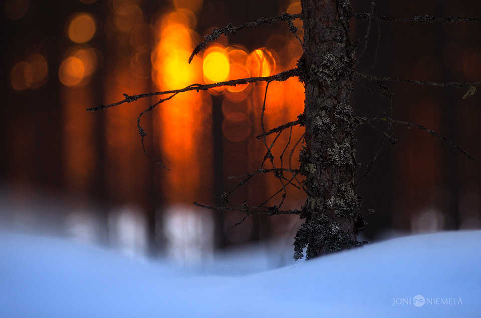 Photograph Sunset In The Forest by Joni Niemelä on 500px