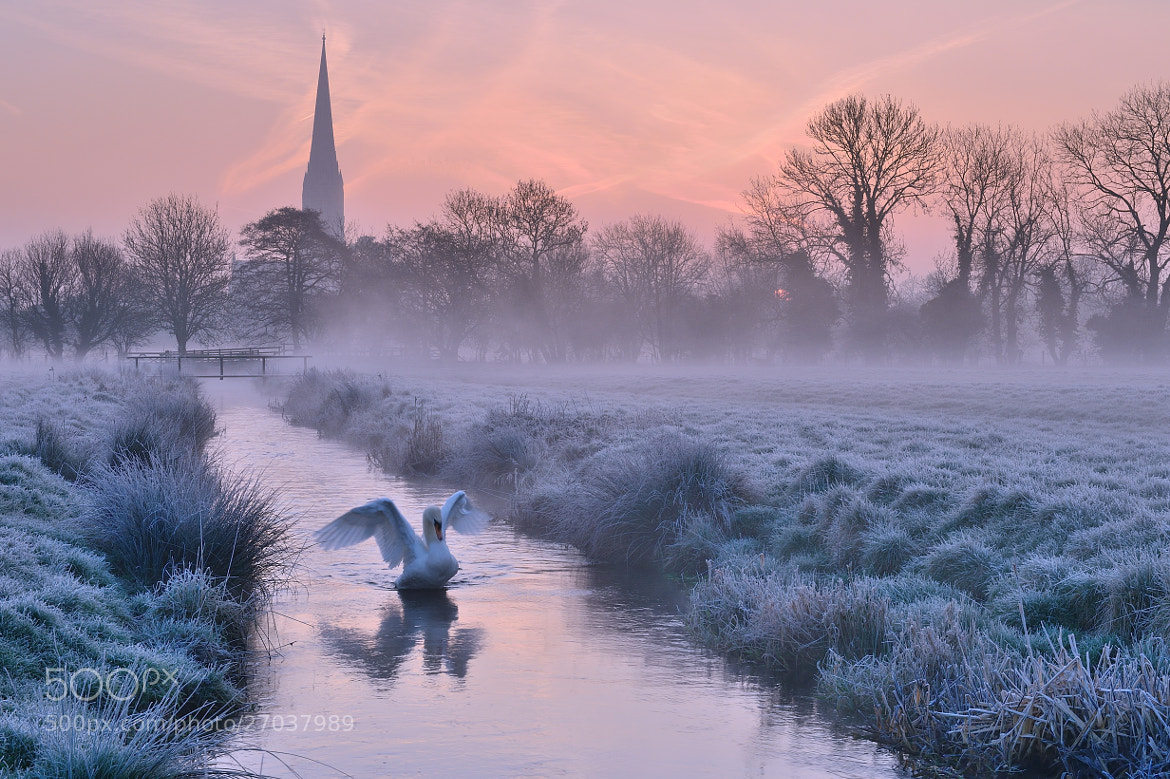 Photograph Salisbury Water Meadows by Andreas Jones on 500px