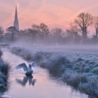 A very obliging Swan at Salisbury.
